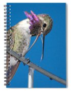 Hummingbird Yawn With Tongue Spiral Notebook