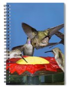 Hummingbirds At Feeder Spiral Notebook