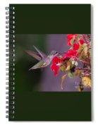 Hummy Feeding On Flower Spiral Notebook