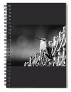 Hummy On Fence B And W Spiral Notebook