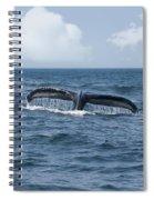 Humpback Whale Fin Spiral Notebook