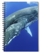 Humpback Whale Near Surface Spiral Notebook