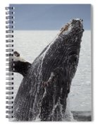 Humpback Whale Spiral Notebook