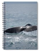 Humpback Whale Tail Spiral Notebook