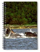 Humpback Whales Feeding Spiral Notebook