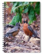 Hungry Baby Robin Spiral Notebook