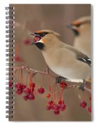 Hungry Birds Spiral Notebook