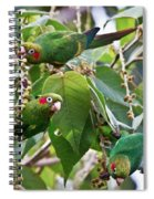 Hungry Chiriqui Conures Spiral Notebook