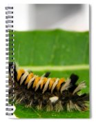 Hungry Hairy Caterpillar Spiral Notebook