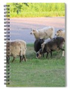 Hungry In Life  Spiral Notebook