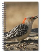 Hungry Red-bellied Woodpecker - Melanerpes Carolinus Spiral Notebook