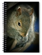 Hungry Squirrel Spiral Notebook