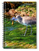 Hungry Willet Spiral Notebook