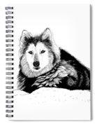 Huskie In The Snow Spiral Notebook