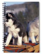 Huskies On A Sled Spiral Notebook