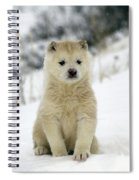 Husky Dog Puppy Spiral Notebook