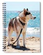 Husky On The Beach Spiral Notebook