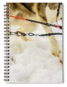 Husky Sled Dogs, Lapland, Finland Spiral Notebook