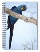 Hyacinth Macaw Anodorhynchus Spiral Notebook