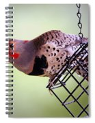 Intergrade Red Shafted And Yellow Shafted Northern Flicker Male Spiral Notebook