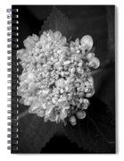 Hydrangea 3 Spiral Notebook
