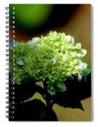 Hydrangea 4 Spiral Notebook