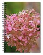 Hydrangea Valentine Spiral Notebook