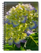Hydrangeas First Blush Spiral Notebook