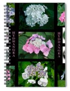 Hydrangeas On Parade Spiral Notebook