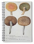 Hypodendrums Fagi And Queris Spiral Notebook