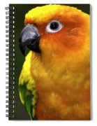 I Am Beautiful Spiral Notebook