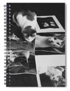 I Am So Photogenic Spiral Notebook
