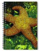 I Found A Starfish Spiral Notebook