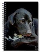 I Got The Blues Spiral Notebook