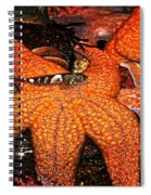I Have Got Your Back Spiral Notebook