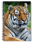 I Peek When I Count Playing Hide N Seek At The Buffalo Zoo Spiral Notebook