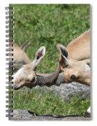 Ibex Doing Battle Spiral Notebook