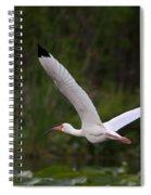 Ibis In Flight Spiral Notebook