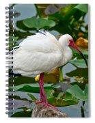 Ibis In Pond Spiral Notebook