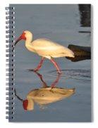 Ibis In Reflection Spiral Notebook