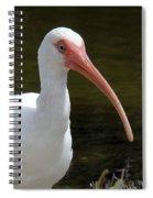 Ibis Portrait Spiral Notebook