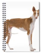 Ibizan Hound Spiral Notebook