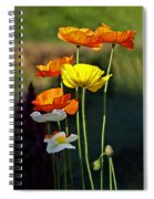 Iceland Poppies In The Sun Spiral Notebook