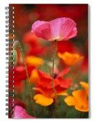 Iceland Poppies Papaver Nudicaule Spiral Notebook