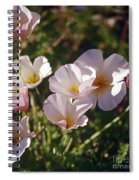 Icelandic Poppies Spiral Notebook