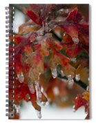 Icy Oak Spiral Notebook