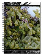 Icy Trees With Black And White Border Spiral Notebook