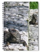 Iguana Bask In The Sun With You Spiral Notebook