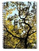 Illuminated Oak Tree Spiral Notebook