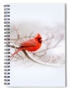 Img_2559-8 - Northern Cardinal Spiral Notebook